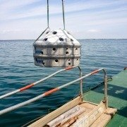 Ripopolamento marino
